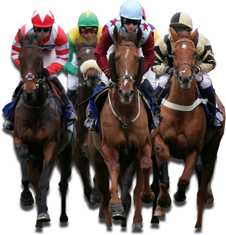 Horse betting made simple rugby sports betting