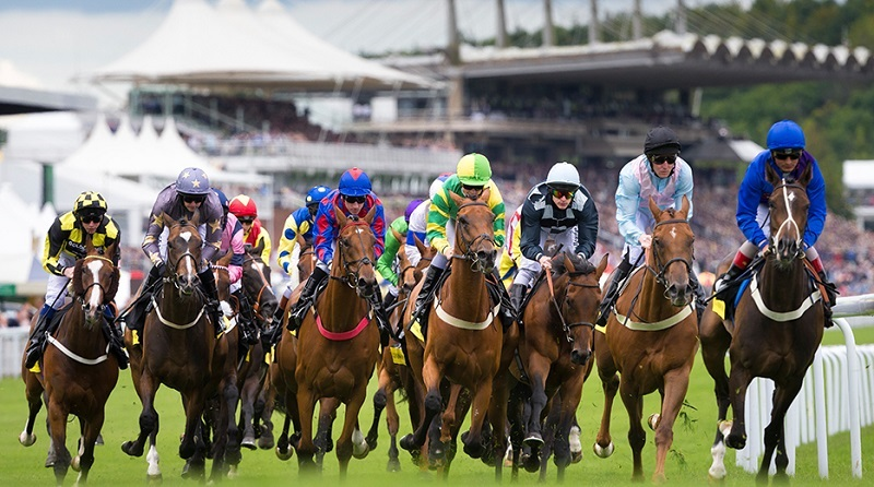 horse racing tips for beginners australia